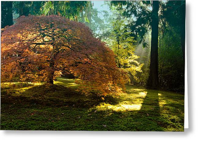 In The Gentle Autumn Light Greeting Card by Don Schwartz