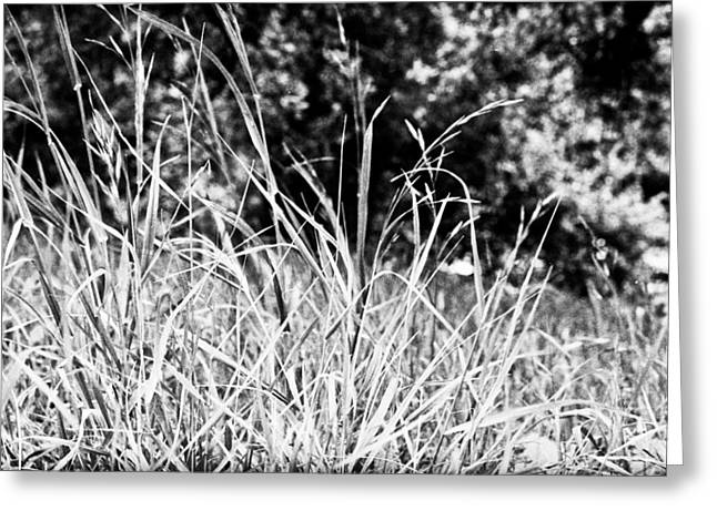 In The Grass Greeting Card by Andrew Raby