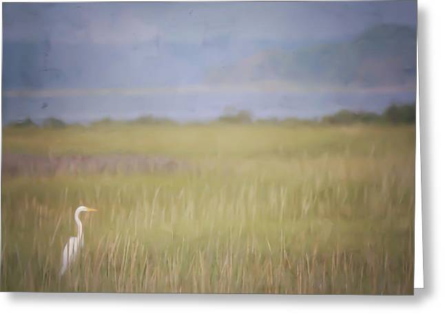 Greeting Card featuring the photograph In The Marsh  by Kerri Farley