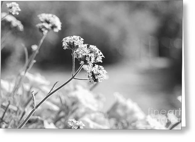 In The Meadow Greeting Card by Barbara Bardzik