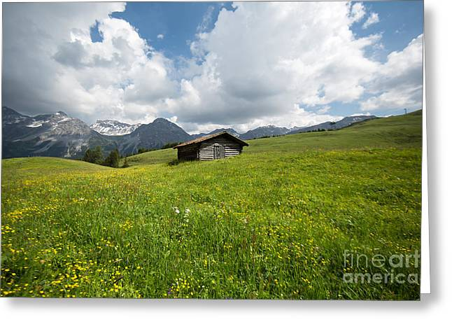 In The Middle Of Green Greeting Card by Maurizio Bacciarini