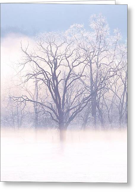 In The Mist Greeting Card by Laurinda Bowling