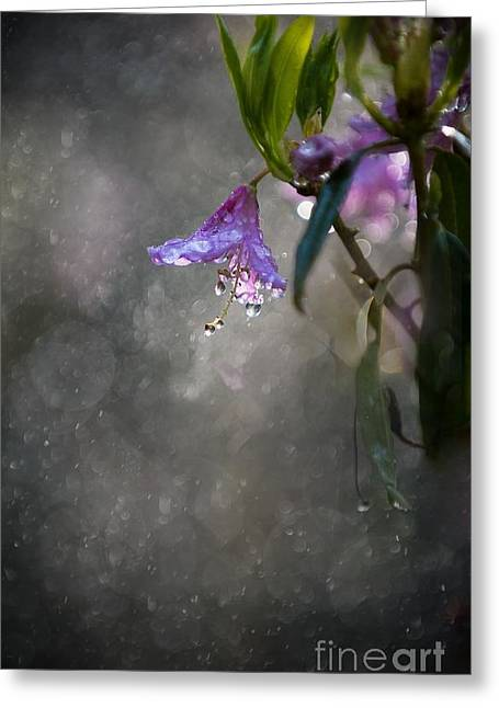 In The Morning Rain Greeting Card