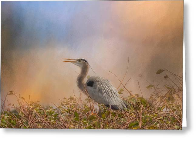 In The Nest - Great Blue Heron Greeting Card by Kim Hojnacki