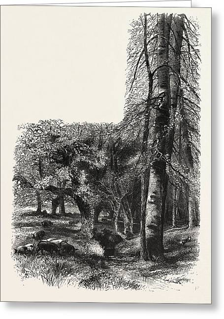 In The New Forest, Near Lyndhurst, The Forest Scenery Greeting Card by English School