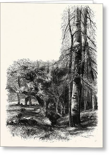 In The New Forest, Near Lyndhurst, Uk, Britain Greeting Card by English School