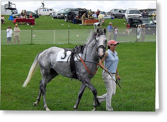 In The Paddock Greeting Card