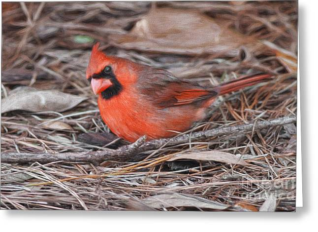 In The Pine Needles And Leaves Greeting Card by Deborah Benoit