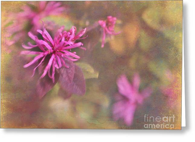 In The Pink Greeting Card by Judi Bagwell