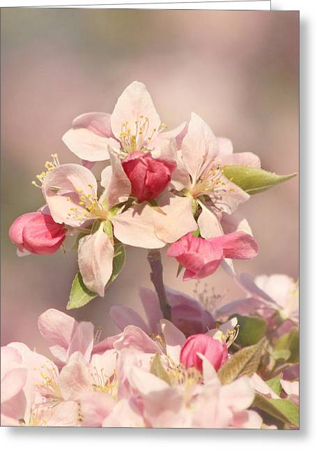 In The Pink Greeting Card by Kim Hojnacki
