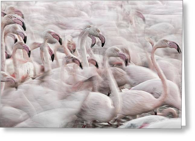 In The Pink Transhumance Greeting Card