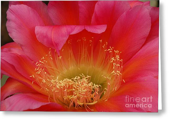 Greeting Card featuring the photograph In The Pink by Vivian Christopher