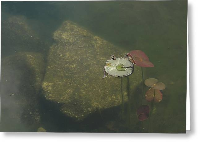 Greeting Card featuring the photograph In The Pond by Carol Lynn Coronios