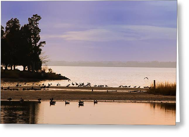 In The Quiet Morning Greeting Card by Bill Cannon