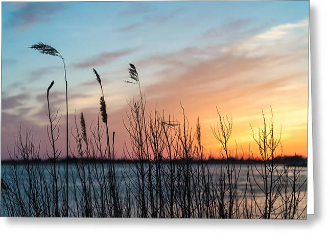 In The Reeds Greeting Card by Kristopher Schoenleber