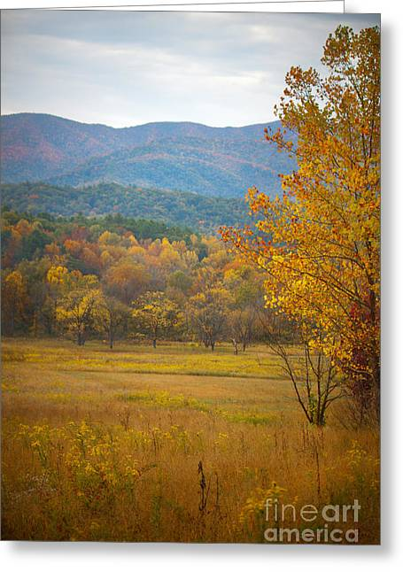 In The Smokies Greeting Card by Lena Auxier