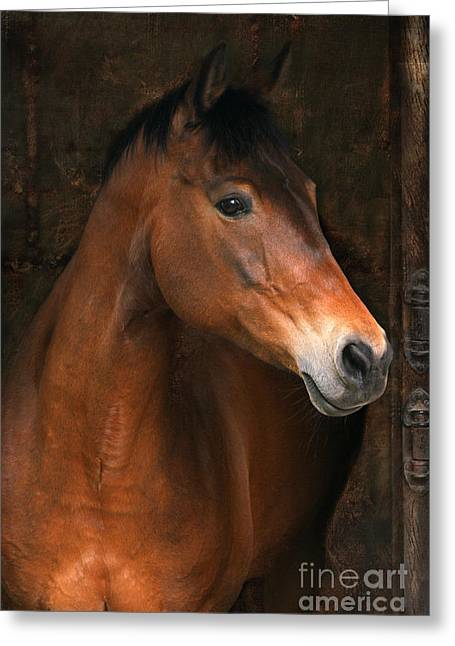 In The Stable Greeting Card by Angel  Tarantella