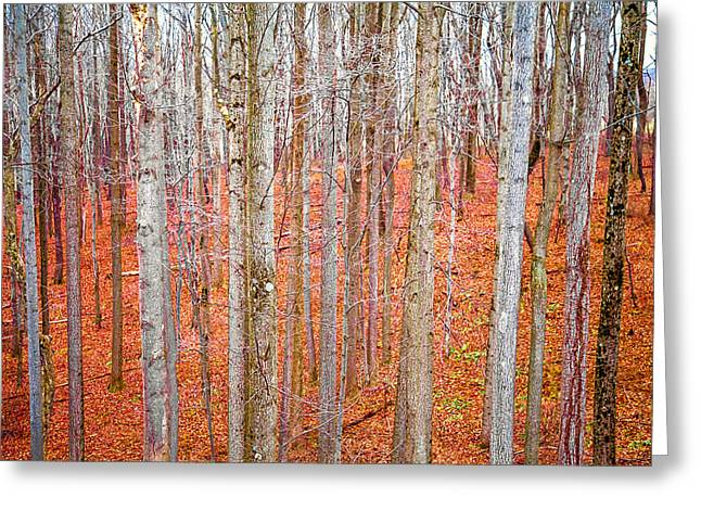 In The Sticks Greeting Card by April Reppucci