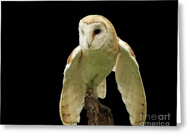 In The Still Of Night Barn Owl Greeting Card by Inspired Nature Photography Fine Art Photography