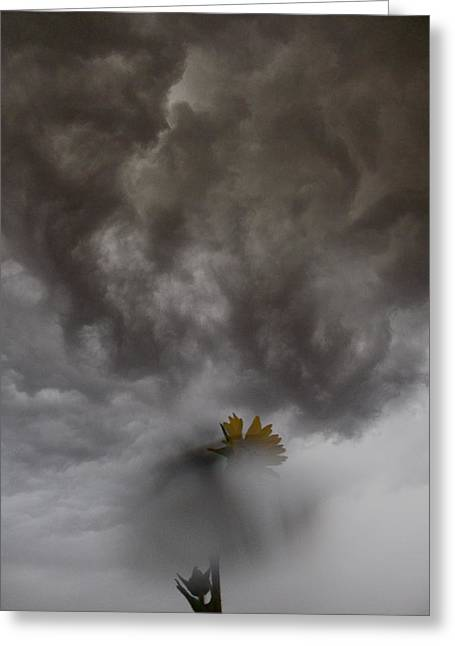 In The Storm Greeting Card by Tim Good