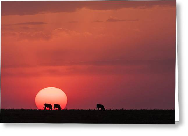 Greeting Card featuring the photograph In The Sun by Scott Bean