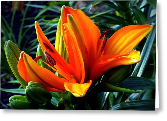 In The Tropics Greeting Card by Karen Wiles