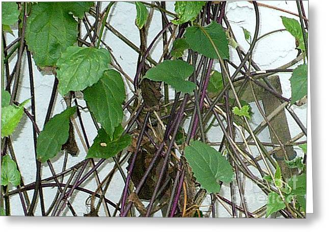 In The Vines Greeting Card by Kryztina Spence