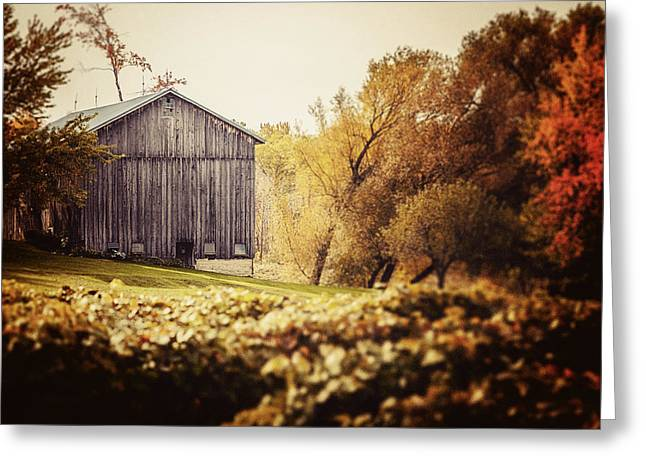 In The Vineyard - Barn Landscape Greeting Card by Lisa Russo