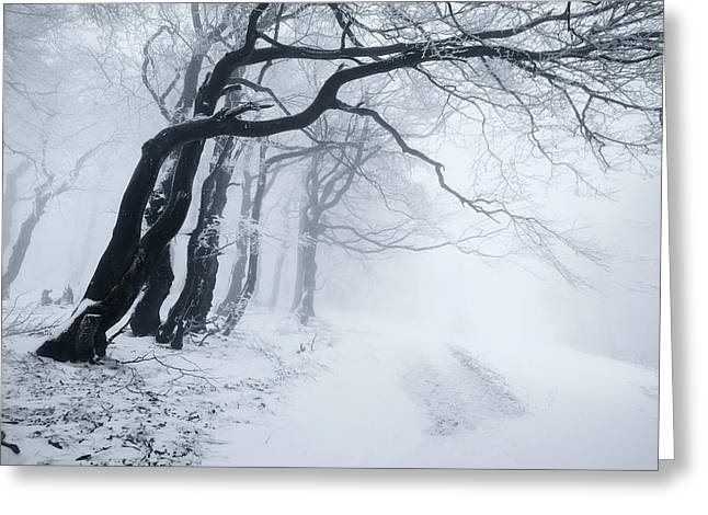 In The Winter Forest Greeting Card