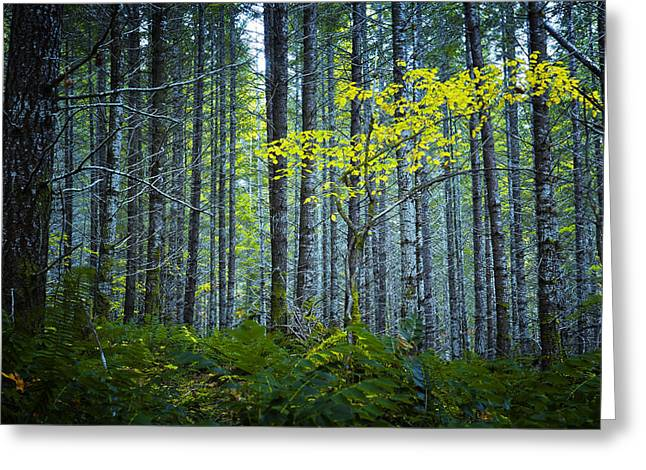 In The Woods Greeting Card by Belinda Greb