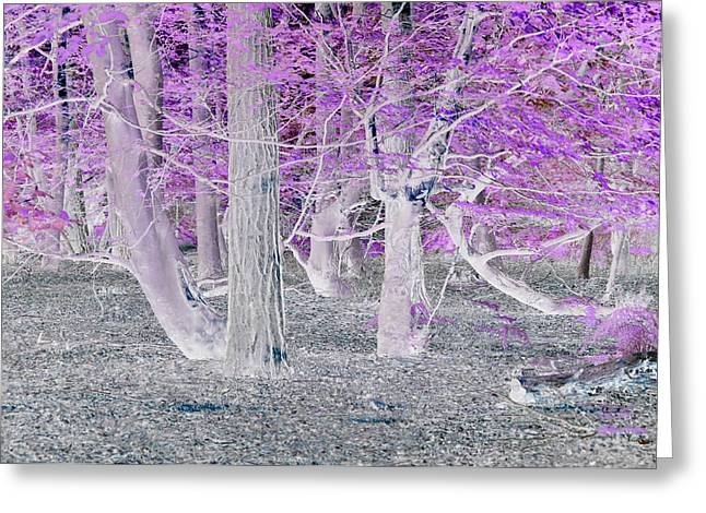 In The Woods Greeting Card by David King