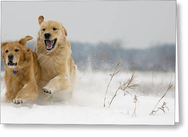 In Their Element Greeting Card
