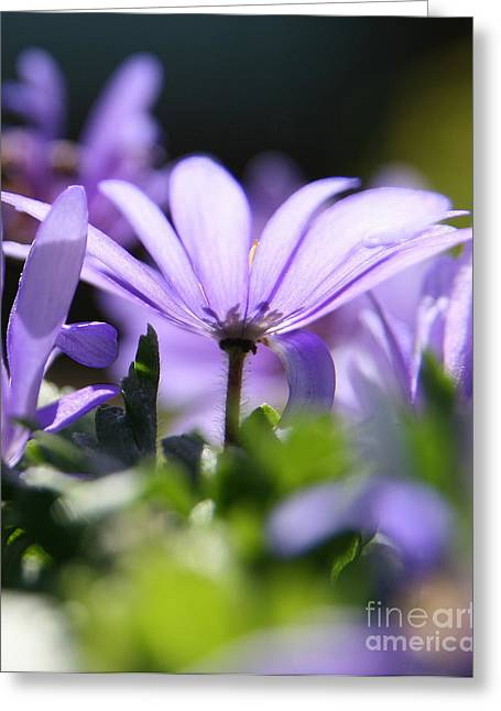 Floral Purple Light  Greeting Card