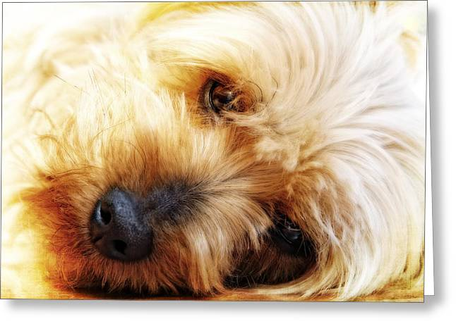 In Your Yorkie Dreams Greeting Card