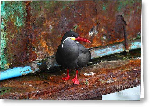 Inca Tern On Girder Greeting Card by James Brunker