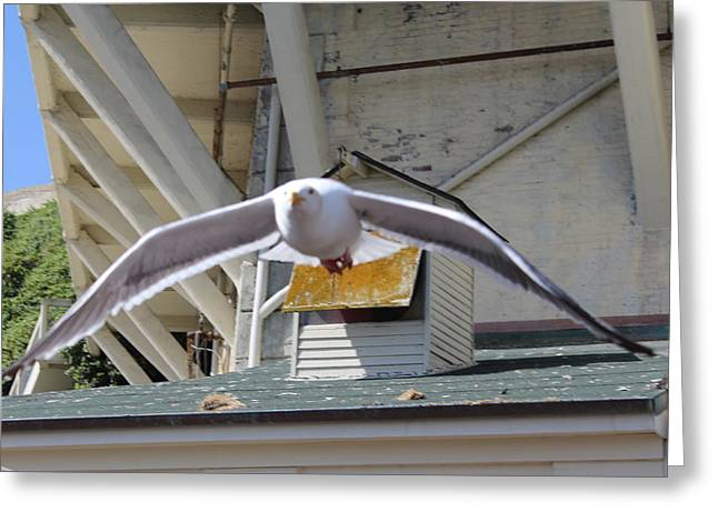 Incoming Seagull Greeting Card