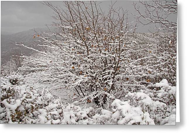 Incredible Snow Storm Greeting Card by Kenny Bosak