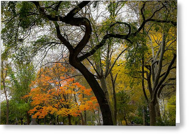 Independent Trees Greeting Card