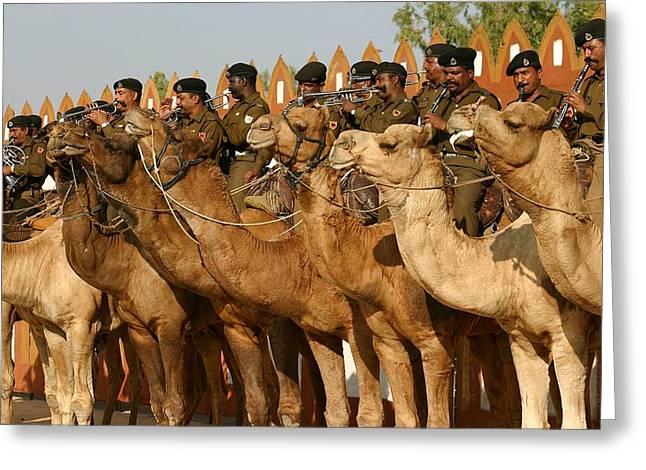 India Camel Band Greeting Card by Henry Kowalski
