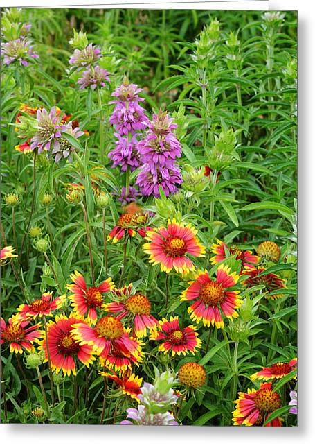 Indian Blankets And Lemon Horsemint Greeting Card
