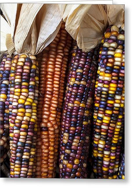 Indian Corn Close Up Greeting Card