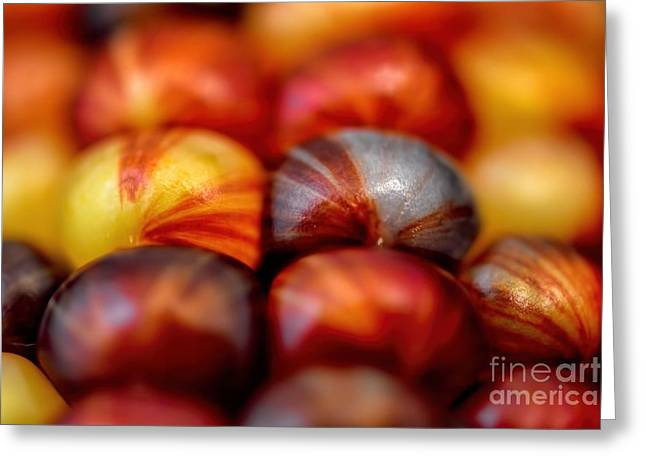 Indian Corn Kernel Autumn Greeting Card