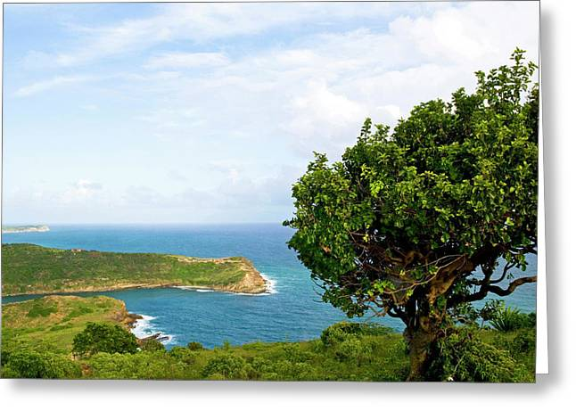 Indian Creek Point, Antigua, West Indies Greeting Card by Nico Tondini