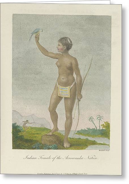 Indian Female Of The Arrowauka Nation Greeting Card by British Library