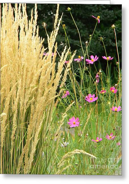 Indian Grass And Wild Flowers Greeting Card