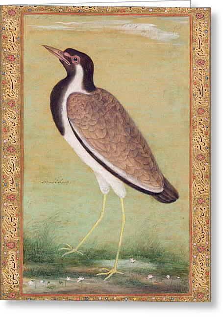 Indian Lapwing Greeting Card