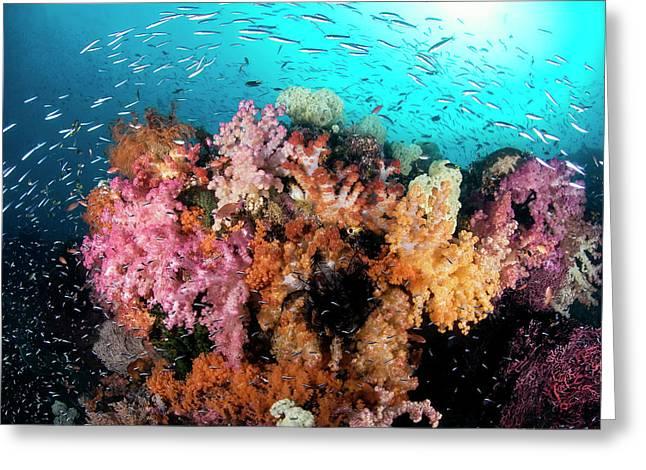 Indian Ocean, Indonesia, Papua, Raja Greeting Card by Jaynes Gallery