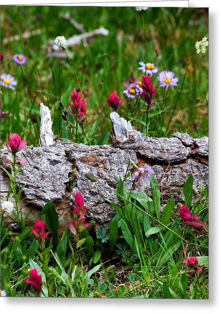 Greeting Card featuring the photograph Indian Paintbrush by Ronda Kimbrow