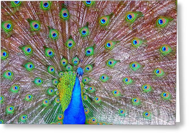 Indian Peacock Greeting Card by Deena Stoddard