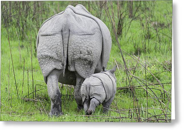 Indian Rhinoceros And Week Old Calf Greeting Card